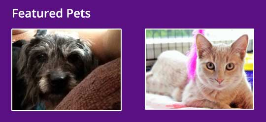 Featured Pets CK Animal Rescue