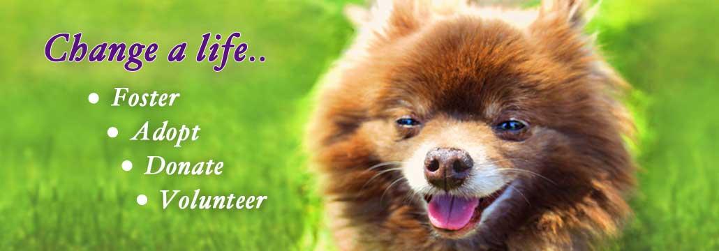 Foster-Adopt-Donate-CK-Animal-rescue