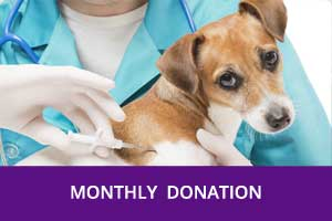 Monthly-Donation-Chatham-Kent-Animal-Rescue