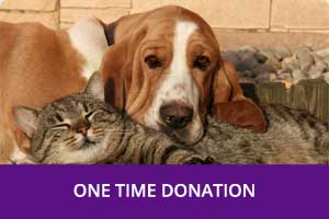 One-Time-Donation-Chatham-Kent-Animal-Rescue