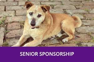 Senior-Sponsorship-Chatham-Kent-Animal-Rescue